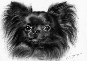 Commissioned painting of Chihuahua by petpaintings