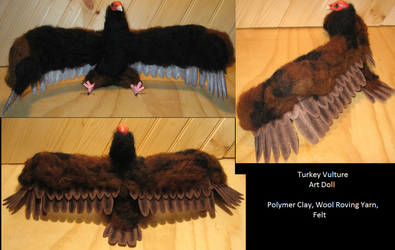 Turkey Vulture Adult 2 by DancingVulture