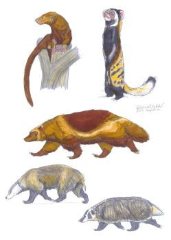 Mustelinae-1 Tayra,Polecat, Wolverine and Badger's by Gredinia