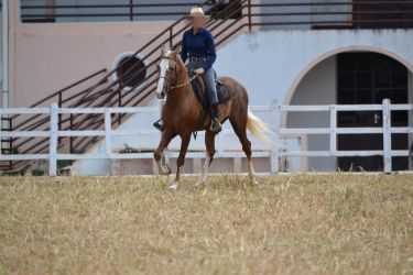 Palomino M Marchador by Trz-125