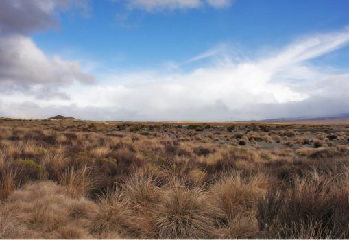 Tussock land Waiouru New Zealand by CathleenTarawhiti