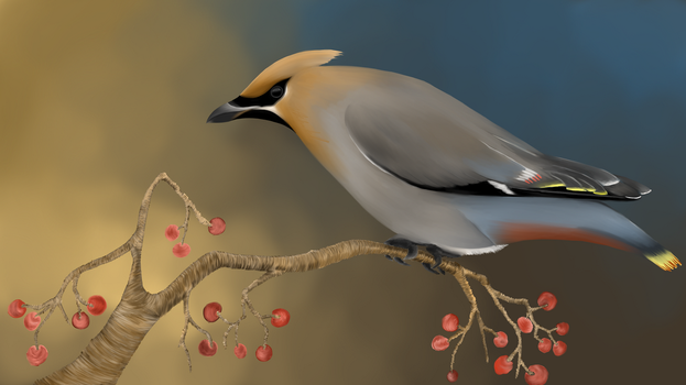 Bohemian Waxwing by newtechwave