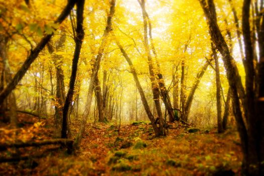 Fall time forest by beyondimpression
