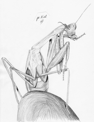 Praying Mantis by pencilir