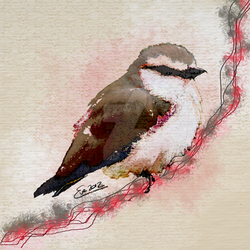 Daydreaming Bird by TheGalleryOfEve