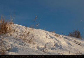 Snow Bank by SalsolaStock