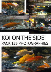 PART I koi fish - on the side - by creationtakesun by creationtakesun