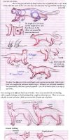 Kitty Tutorials 2- Bodies by The-Skykian-Archives