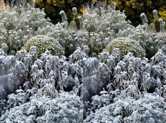 Unlit Frost XI Stereo Pair Coombe Wood Raised Beds by aegiandyad