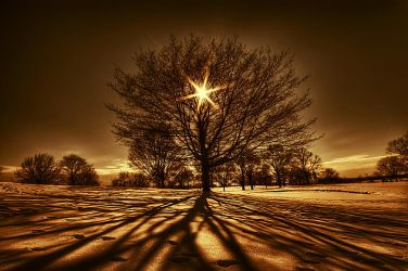 Tree Of Light by lowapproach
