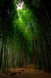 Bamboo Dreams by dsnider