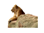 Lioness on a cliff (precut) by JeanneyStock