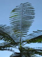 Green Palms by FiLH