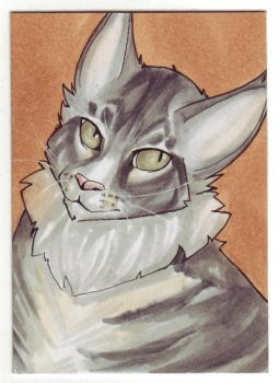 [ACEO] Dragarta by Diaminerre