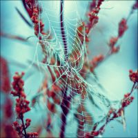 Web by Eredel