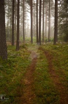 Forestpath by Hanna92