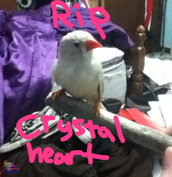 RIP Crystalheart by AngelCnderDream14