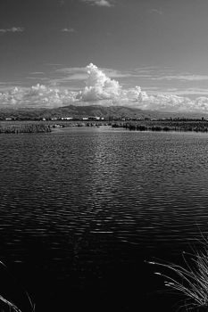 Between Storms Black and White by Pressesky
