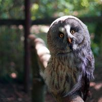 Owly owl V by WouterPera