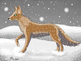 Wolf in the snow by Marlowes