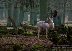 The White Forest King by TheFunnySpider