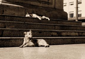 Street Dogs by karateforkane