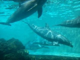 Dolphins by Shinishii-is-Deead