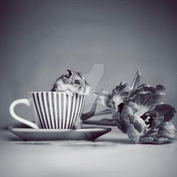 [Afternoon tea] by StacyD