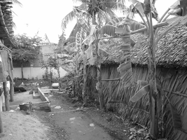 Banana Trees by toengt