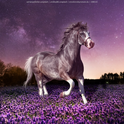 Premade ~ Silver PON (Full Size) by KeonahN