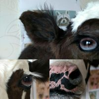 Work in progress - baby cow by DeerfishTaxidermy
