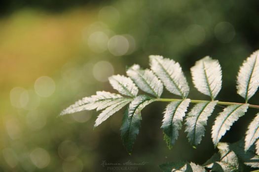 Fern by KarmensPhotos