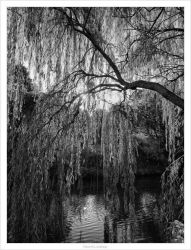 Willow by the riverside by philosomatographer