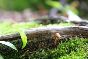 mosses roots and fungus by minamiko