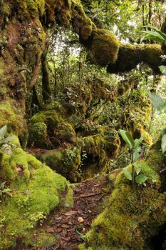 Mossy forest Stock 20 by Malleni-Stock