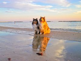 Dogs on the mirror by hermio
