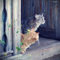 two cats by oxygen2608