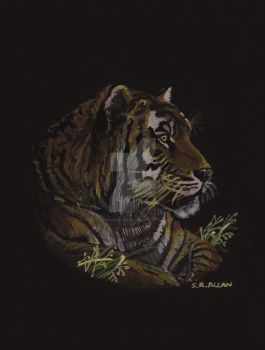 Tiger On Black by soniabigcheese