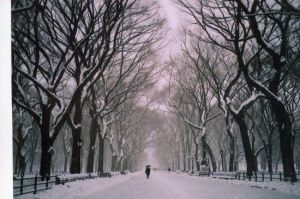 Snow in Central Park by Ccard