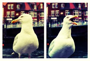 Seagul. by ToniTurtle