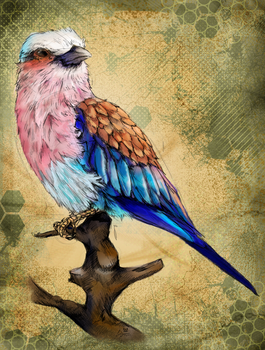 Lilac Breasted Roller Bird by charfade