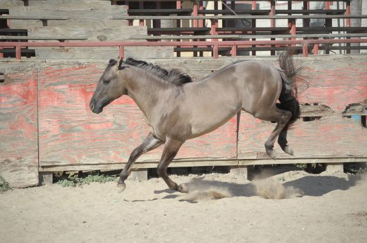 DWP FREE HORSE STOCK 276 by DancesWithPonies