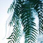 the green waves of life by lichtfaengerin
