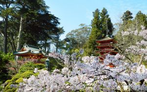 Sakura at the Japanese Tea Gardens by Bahr3DCG
