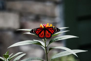 Red Butterfly by paintballbob