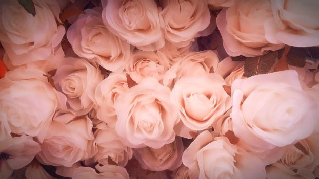 Bed of Roses by RCAmbriz
