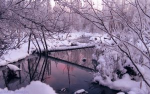 FROSTY NORTH LAND REFLECTION by 1arcticfox
