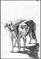 Russian wolfhounds sketch by Delta-NIFTI