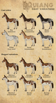 /Quiang/ Coat Variations by BUGHS-22