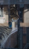 Record Store Cat 2 by AaronMk